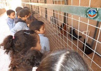 Trip Report To animal farm 1 st y